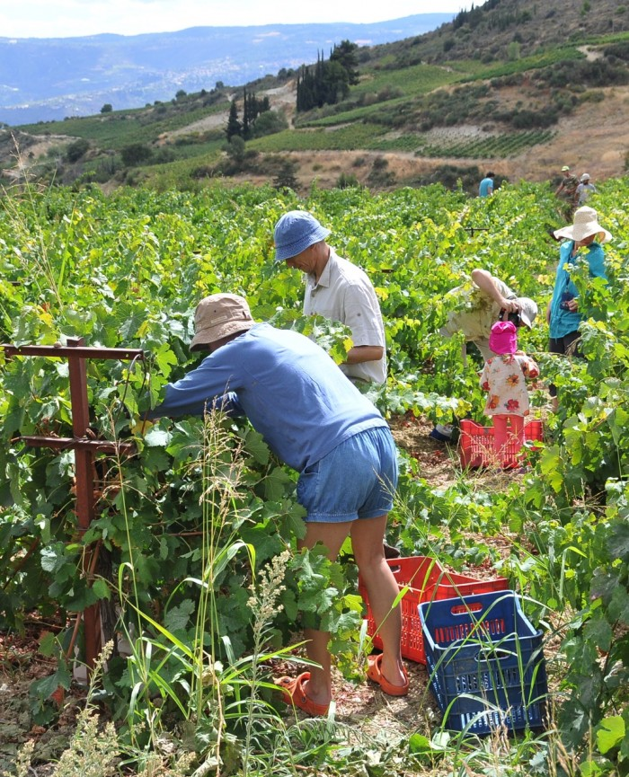 agro tourism Introduction to agri-tourism description in general, agri-tourism is the practice of attracting travelers or visitors to an area or areas used primarily for.