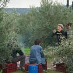 olive picking agrotourism peloponnese hotel